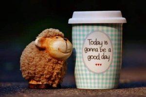 sheep- cup of coffee - feeling good